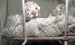 ลูกเสือโคร่งขาวเบงกอล 3 ตัวในไครเมีย