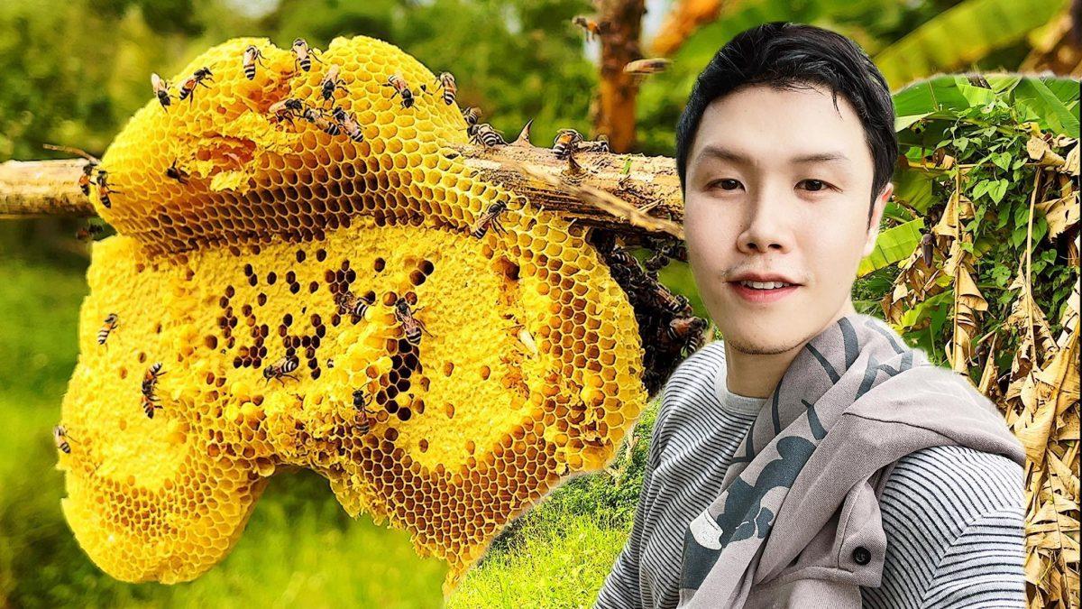 """รู้หรือไม่? ในรังผึ้งมีแต่ """"ตัวเมีย"""""""