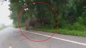 เอาอีกแล้ว! ช้างป่าคู่เดิมเปิดฉากชนกัน ที่อุทยานแห่งชาติแก่งกระจาน