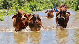 ความคืบหน้า สถานการณ์น้ำท่วมอุบล – น้ำมูลมีแนวโน้มลดลง