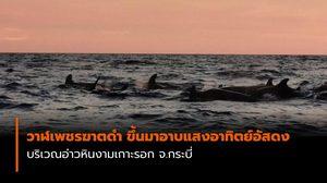 วาฬเพชรฆาตดำ 10-15 ตัว ขึ้นมาอาบแสงอาทิตย์อัสดง ที่อ่าวหินงามเกาะรอก จ.กระบี่