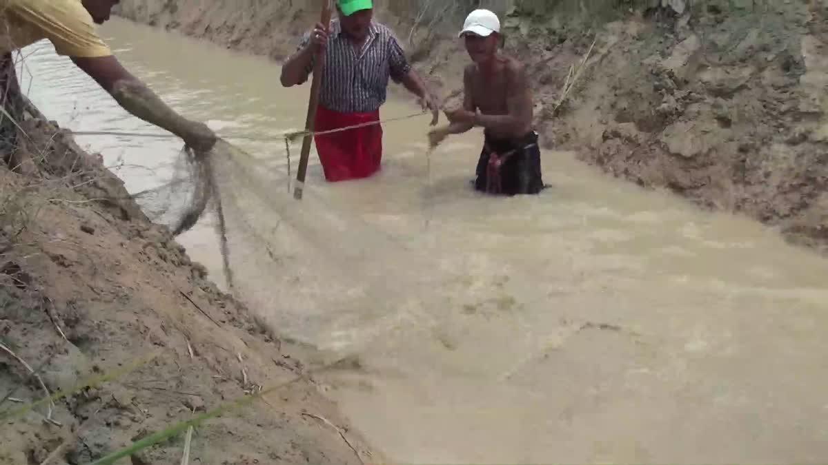 ชาวบ้านช่วยกันจับจระเข้ความยาว 3 เมตรที่หลุดจากบ่อเลี้ยง