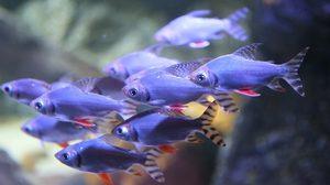 รู้จักกับ 5 ปลามงคล เสริมโชคลาภรับตรุษจีน !