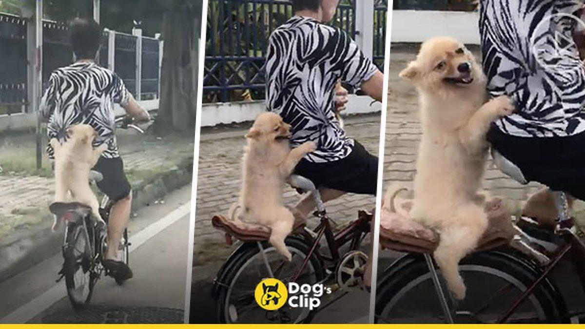 น้องหมาชอบใจยิ้มแฉ่งเกาะเอวซ้อนท้ายจักรยานคุณป้า ชมนกชมไม้
