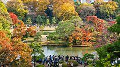 สถานที่ชมใบไม้เปลี่ยนสีในโตเกียว ที่ใครๆ ก็ไปเที่ยวได้ง่ายๆ