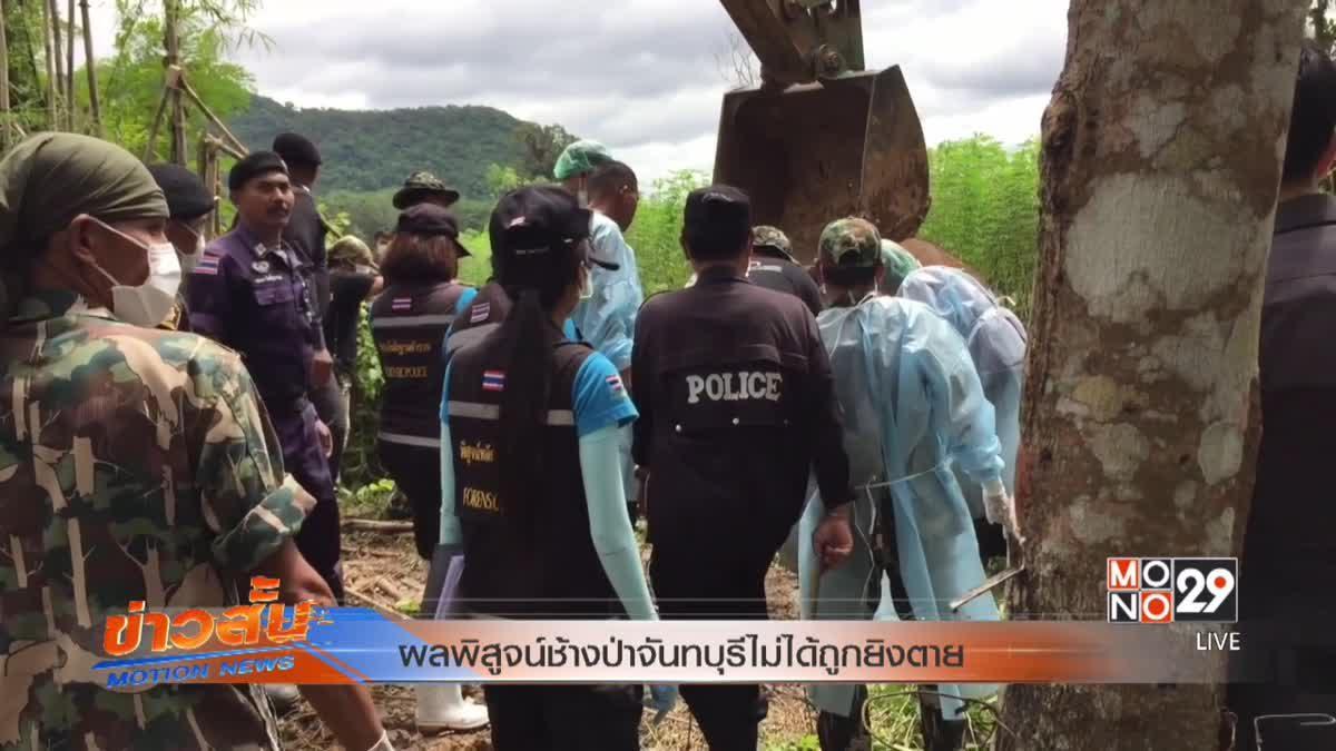 ผลพิสูจน์ช้างป่าจันทบุรีไม่ได้ถูกยิงตาย