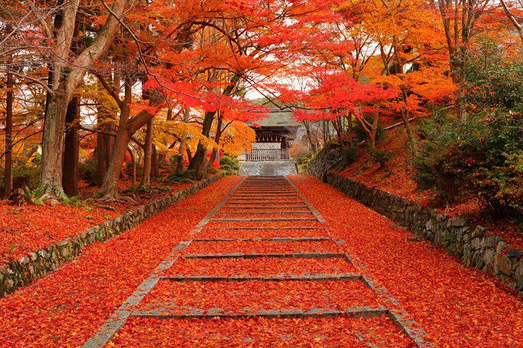 วัดบิชามอนโด (Bishamon-do Temple), เกียวโต สถานที่ ชมใบไม้เปลี่ยนสีที่ญี่ปุ่น