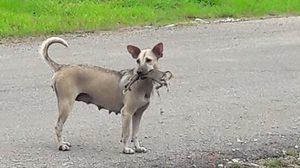 เศร้า! แม่สุนัขคาบศพลูกน้อยไปมา หลังลูกสุนัขโดนรถทับ