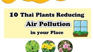 10 Thai Plants Reducing Air Pollution in Your Place