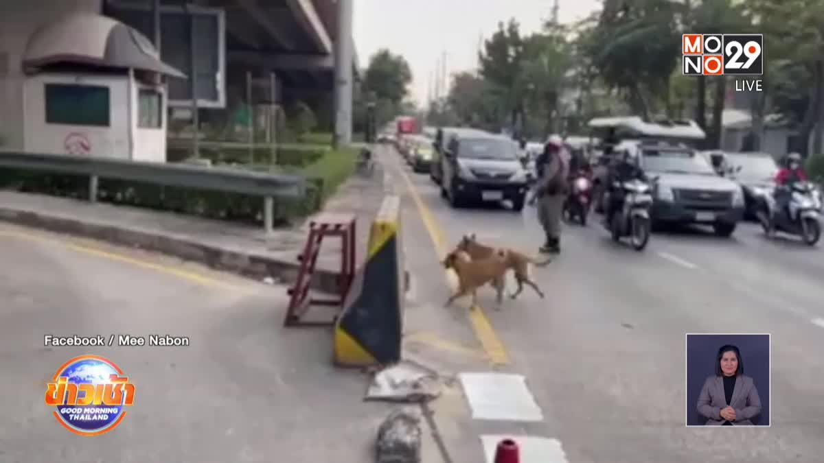 แห่ชื่นชม ตร.โบกหยุดรถ ช่วย 2 ตูบข้ามถนน