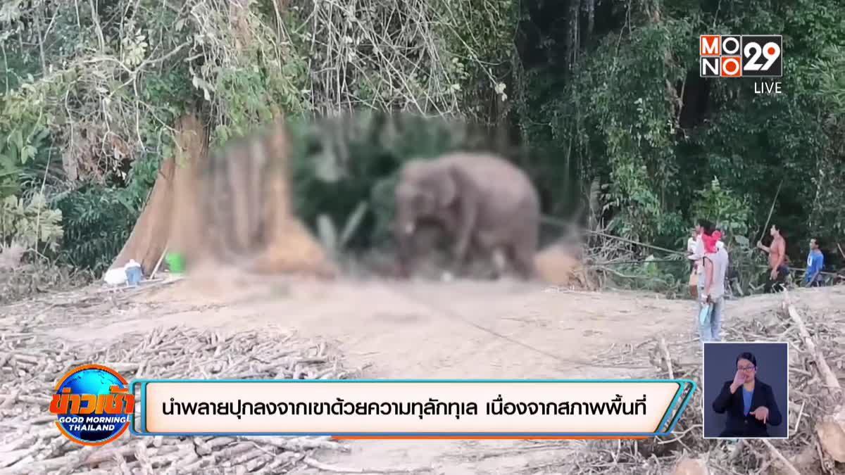 ช้างคลั่งทำร้ายเจ้าของ คาดเกิดอาการหวงตัวเมีย