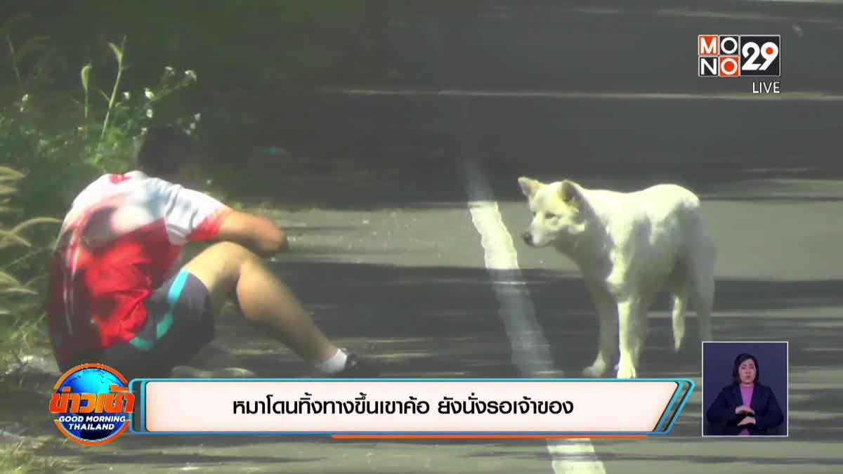 หมาโดนทิ้งทางขึ้นเขาค้อ ยังนั่งรอเจ้าของ