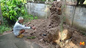 ผู้ช่วยสัปเหร่อ วัย 69 ปี รับจ้างโค่นจอมปลวกโดนทับดับ