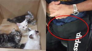 หนุ่มสิงคโปร์ลักลอบขน ลูกแมว 4 ตัว ข้ามประเทศด้วยการยัดเข้าไปในกางเกง