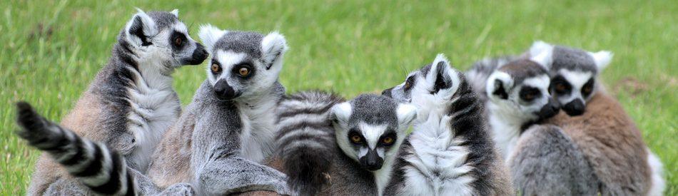 Island of Lemurs: Madagascar สารคดี ลีเมอร์ ตะลุยมาดากัสการ์