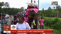 แห่ขันหมากช้าง 23 เชือก แต่งสาวเมืองตรัง