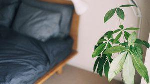 4 ต้นไม้มงคลฟอกอากาศ ที่เหมาะกับการปลูกในห้องนอน