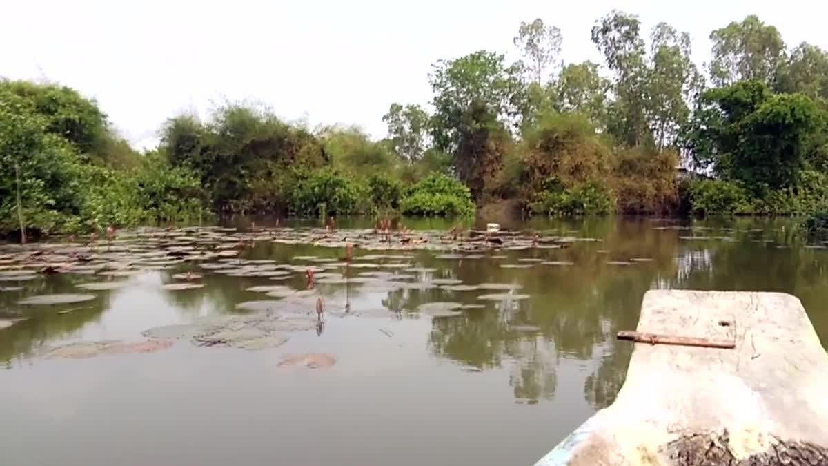 ของดีบ้านฉัน#ป่าทาม