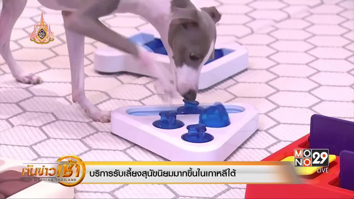 บริการรับเลี้ยงสุนัขนิยมมากขึ้นในเกาหลีใต้