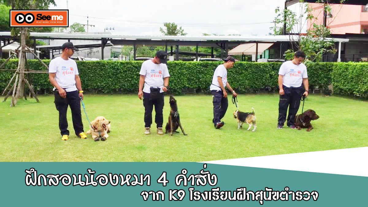 วิธีการฝึกสอนน้องหมา 4 คำสั่งง่ายๆ  ในเบื้องต้น จาก K9 โรงเรียนฝึกสุนัขตํารวจ