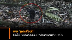 พบ 'ลูกเสือดำ' ในพื้นป่าแก่งกระจาน ใกล้ชายแดนไทย-พม่า