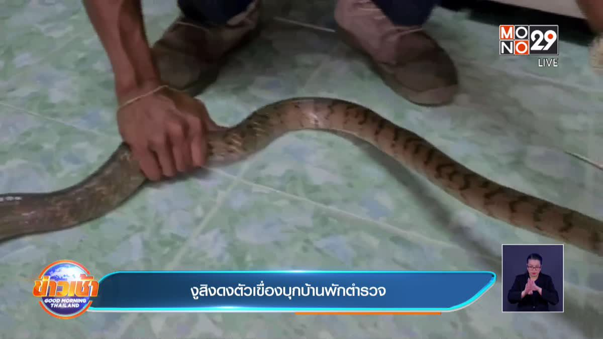 งูสิงดงตัวเขื่องบุกบ้านพักตำรวจ