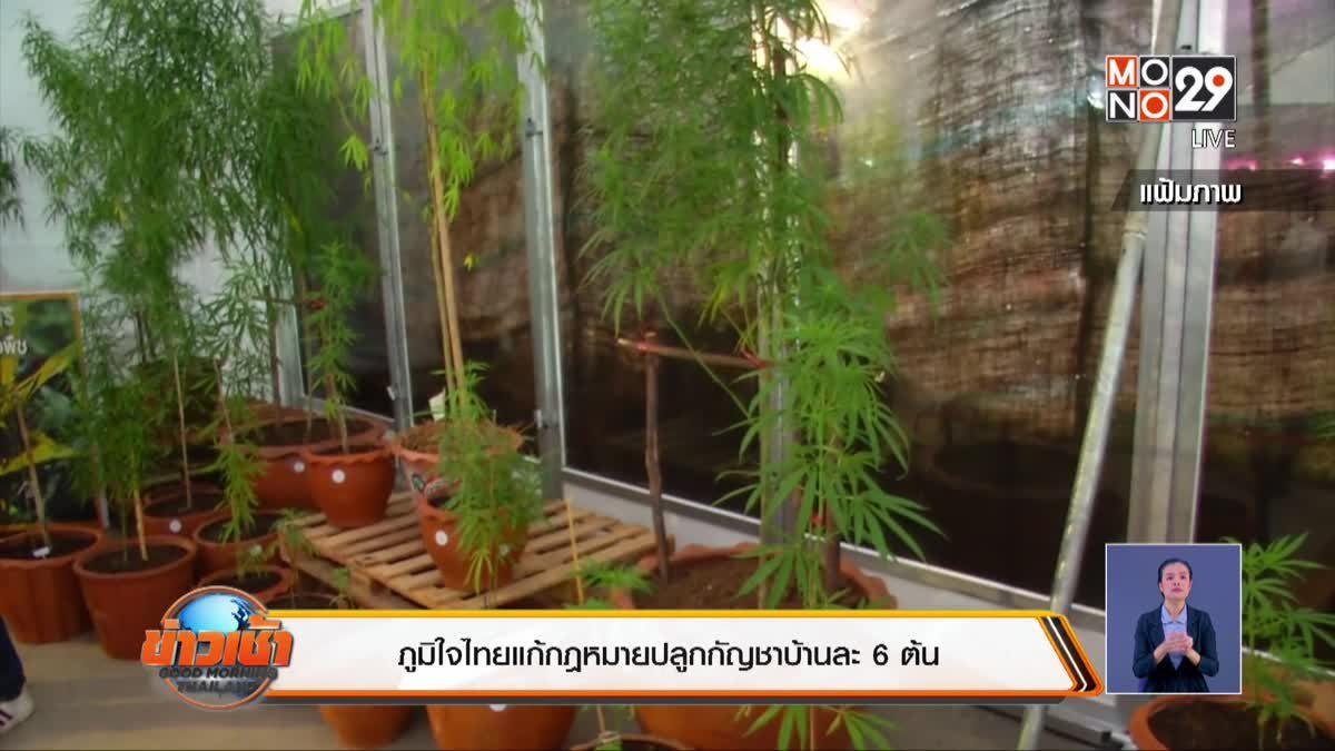ภูมิใจไทยแก้กฎหมายปลูกกัญชาบ้านละ 6 ต้น