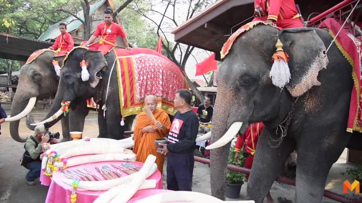ประมวลภาพช้างกว่า 70 เชือก ร่วมงาน 'วันช้างไทย'