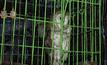 ยึดสัตว์ป่าคุ้มครองไม่ได้รับอนุญาตกว่า 40 ตัว