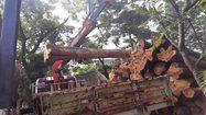 อ.อ.ป. แจงดรามา ตัดไม้สัก 1,000 ท่อนสร้างรัฐสภาแห่งใหม่