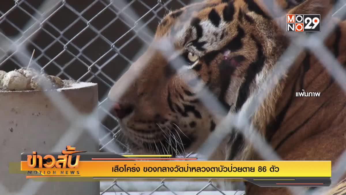 """""""เสือโคร่ง"""" ของกลางวัดป่าหลวงตาบัวป่วยตาย 86 ตัว"""