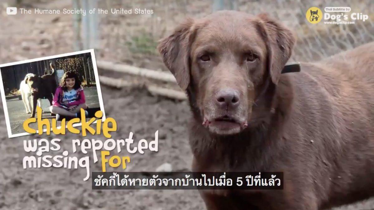 น้องหมาที่หายไปกว่า 5 ปีได้กลับคืนสู่เจ้านายอีกครั้ง