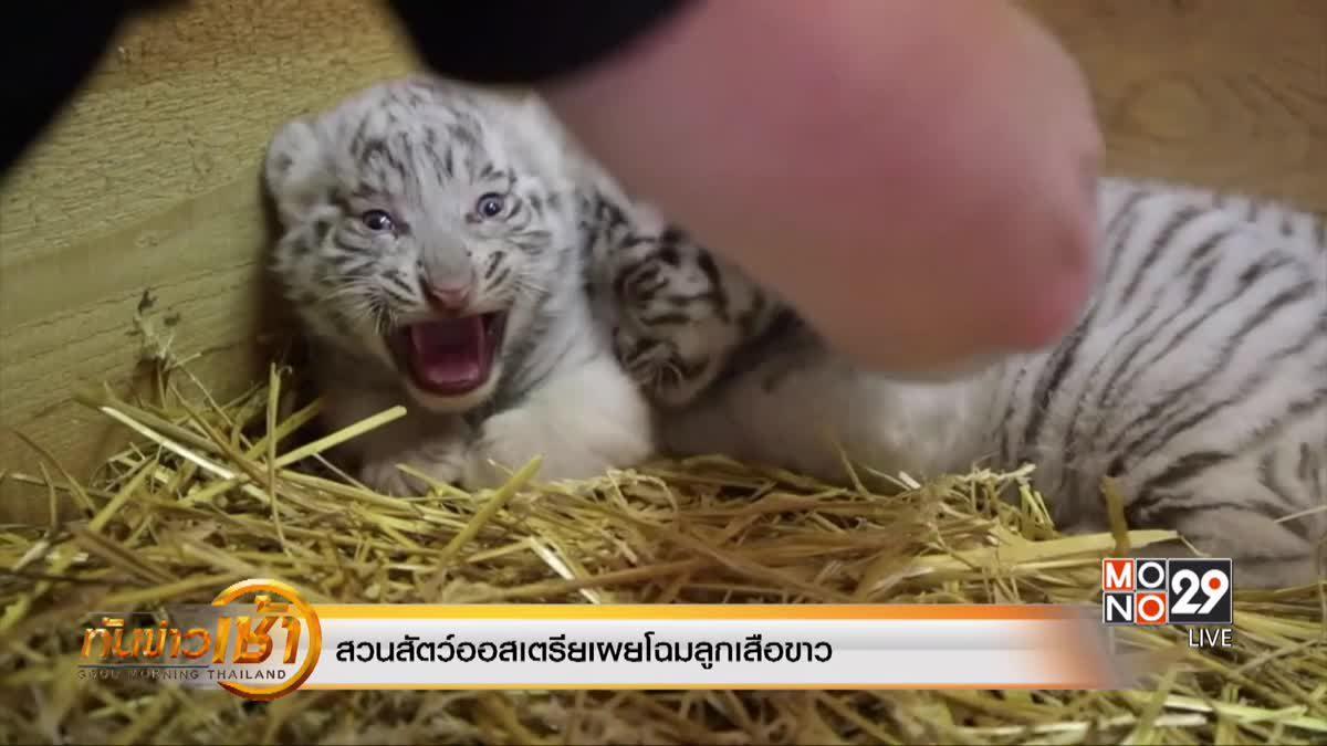 สวนสัตว์ออสเตรียเผยโฉมลูกเสือขาว