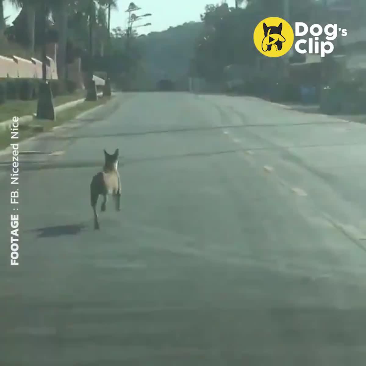 น้องหมาวิ่งตามรถเจ้านายที่กำลังย้ายบ้านหนี
