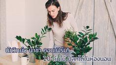 10 ต้นไม้ปลูกในห้องนอน ช่วยแก้นอนไม่หลับ กำจัดโรค นักวิทย์ฯ นาซ่า คอนเฟิร์ม!