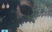 การศึกษาการฟอกขาวของปะการัง