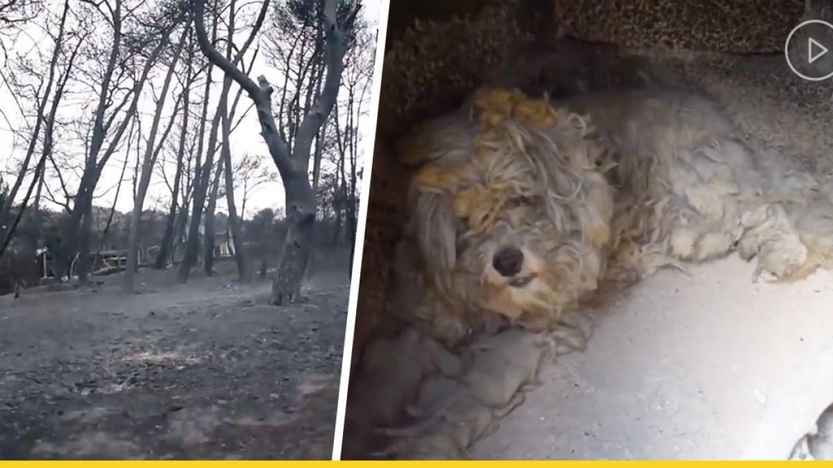 ปาฏิหาริย์! น้องหมารอดจากไฟไหม้ครั้งใหญ่ ด้วยวิธีที่น่าเหลือเชื่อ