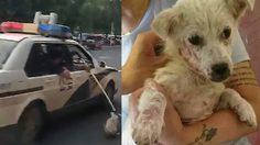 โดนด่าไปชุดใหญ่!! ตำรวจในเมือง หนานจิง ขับรถลากสุนัขไปตามถนน เพราะลืมเอากรงมาด้วย