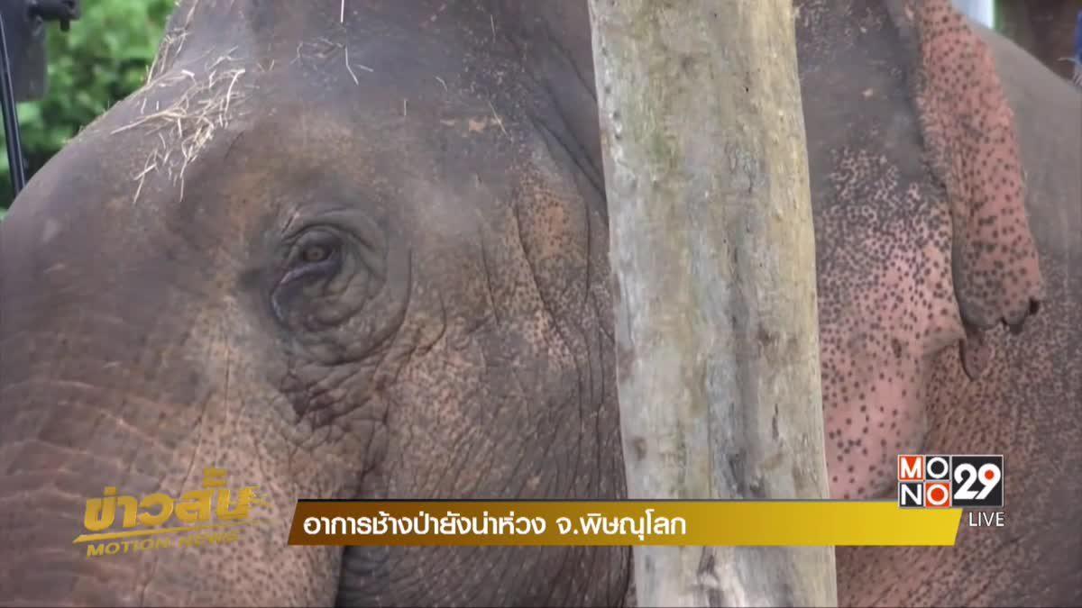 อาการช้างป่ายังน่าห่วง จ.พิษณุโลก
