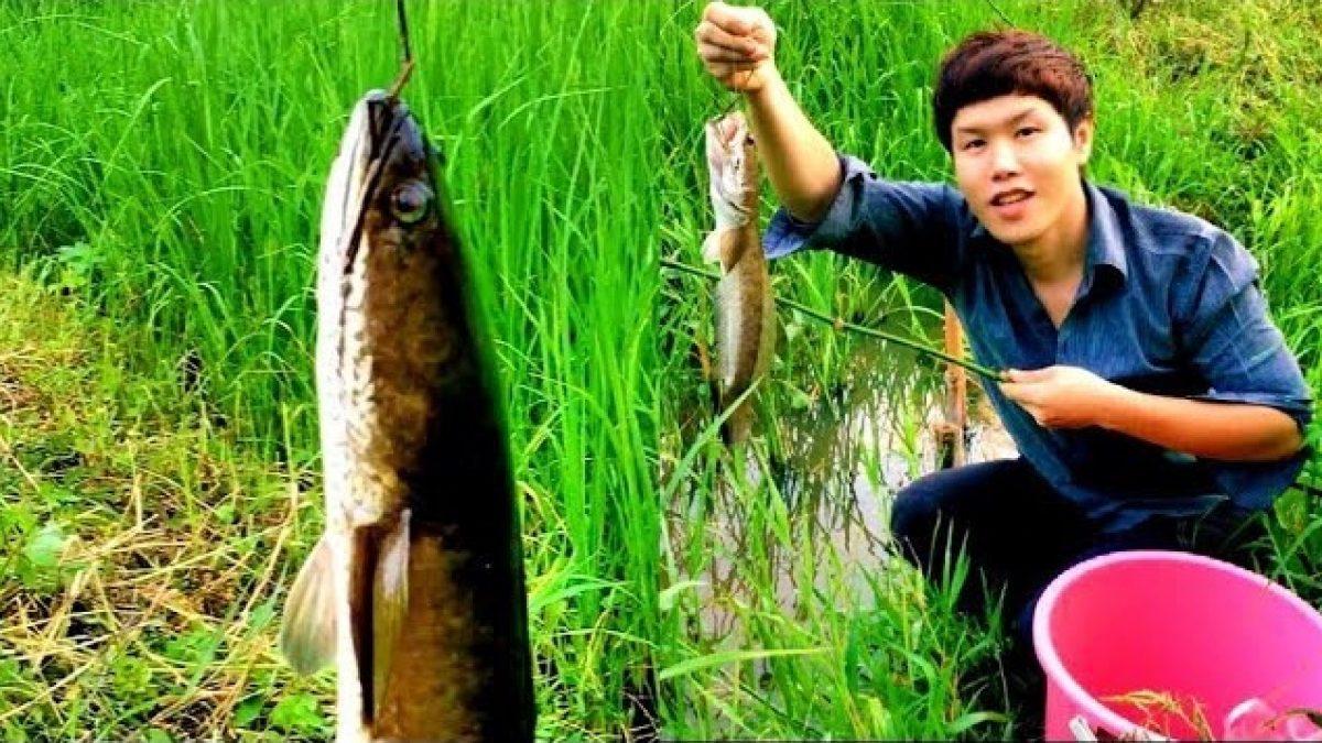 ใช้ชีวิตในป่ากับสราวุฒิ : ใส่เบ็ดปลาดุก ใส่เบ็ดปลาช่อน ในนาข้าว (Snakehead fishing, catfish fishing)