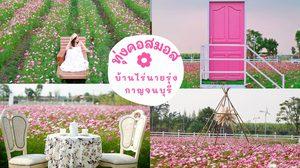 ทุ่งคอสมอส บ้านไร่นายรุ่ง กาญจนบุรี ทุ่งดอกไม้สีชมพูหวานๆ รับวาเลนไทน์