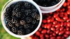 10 ประโยชน์เด็ดๆ ของ อาหารดำๆ ที่ได้ลองแล้วจะติดใจ