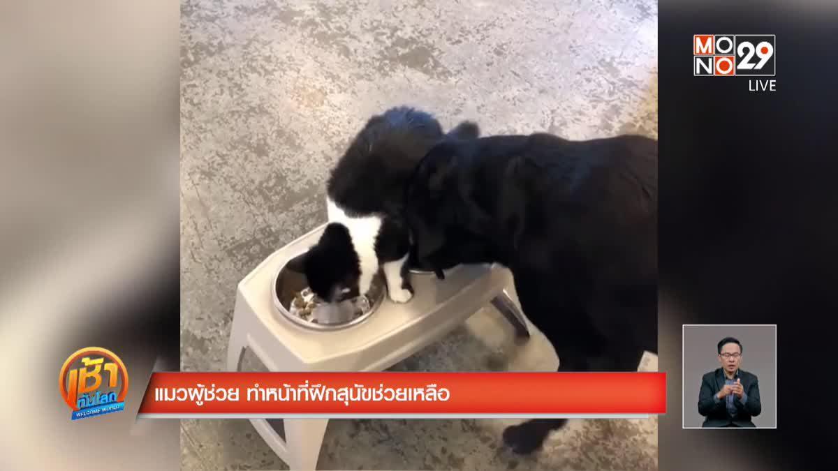 แมวผู้ช่วย ทำหน้าที่ฝึกสุนัขช่วยเหลือ