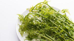 วิธีปลูกผักกูด ผักสวนครัวปลอดสารเคมีแต่งสวนก็ได้เก็บกินก็ดี