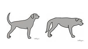 11 ภาษาหางของเจ้าหมา