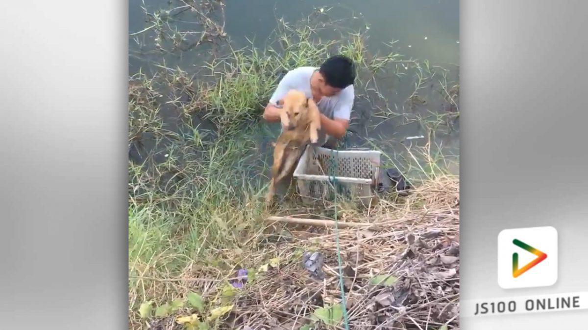 สุนัขโชคดี!!..เจอคนดีช่วยเหลือ (24-02-61)