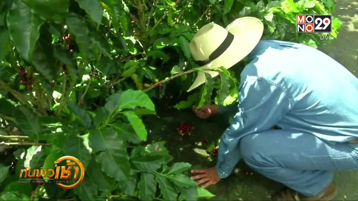 อุตสาหกรรมกาแฟโคลอมเบียจะฟื้นฟูขึ้นในปีนี้