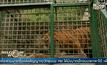 ศูนย์พักพิงสัตว์ในอินโดนีเซีย