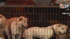 ศาลเกาหลีใต้ ตัดสินฆ่าสุนัขเพื่อบริโภคเนื้อ ผิดกฎหมาย