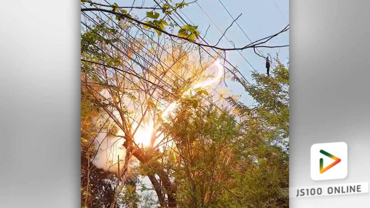 ปลูกต้นไม้ใกล้สายไฟฟ้า  อันตราย!!